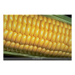 Corn on the cob poster