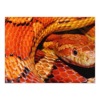 Corn Snake 14 Cm X 19 Cm Invitation Card