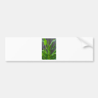 Corn Stalk Bumper Stickers