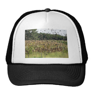 Cornfield and common starlings cap