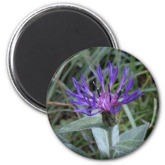 cornflower 6 cm round magnet