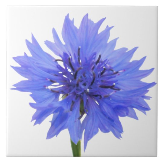 cornflower blue large square tile