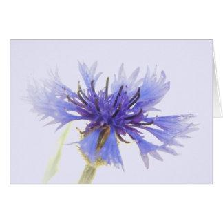 Cornflower Blue Note Card