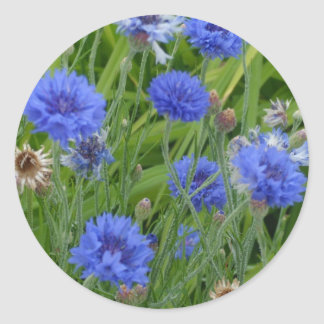 Cornflower Blues Classic Round Sticker