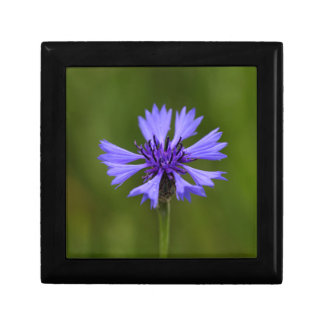 Cornflower (Centaurea cyanus) Small Square Gift Box