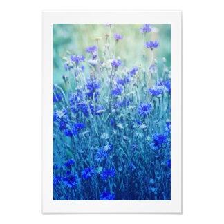 Cornflowers Photo Print