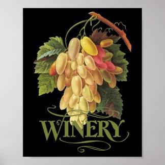 Cornichons blancs Grapes Poster