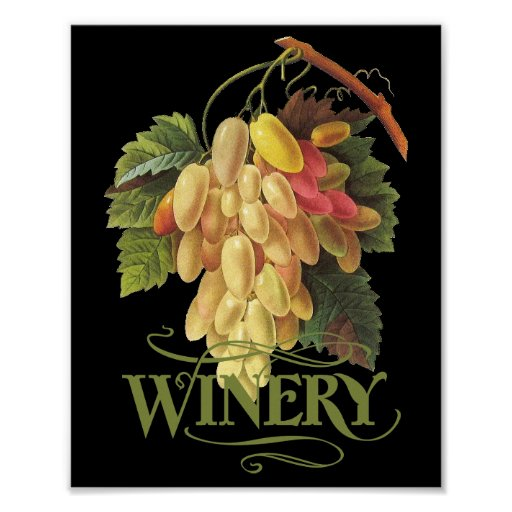 Cornichons blancs Grapes Print