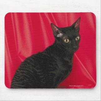 Cornish rex cat mouse pad