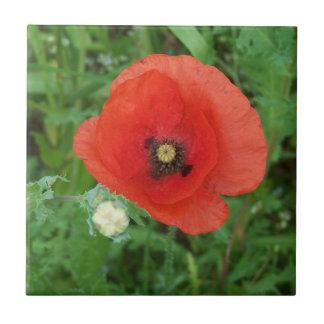 Cornish Wildflowers Poppy Tile