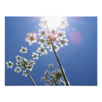 Cornwall Photograph Wild Flowers Against Blue Sky Photographic Print