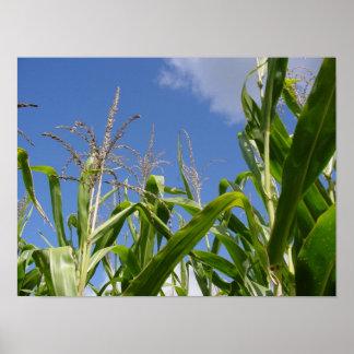 Corny sky poster