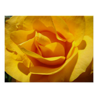 Corporate ART ROSES Orange Rose 1 Art Prints Print