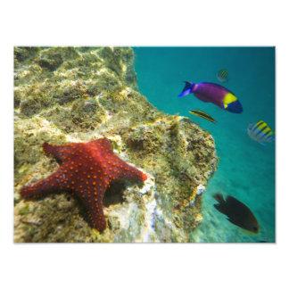 Cortez Rainbow Wrasse male and female and sea Art Photo