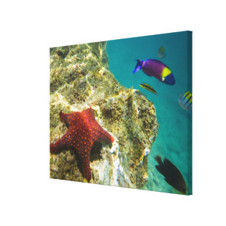 Cortez Rainbow Wrasse male and female and sea Canvas Print