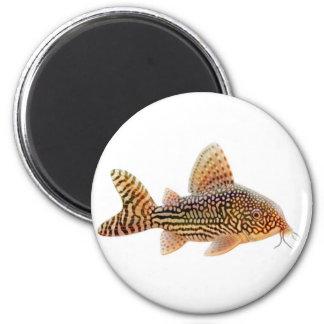 Corydoras Sterbai Catfish Magnet