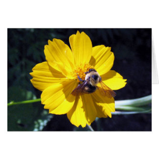 Cosmos Attracts Bumblebee Card