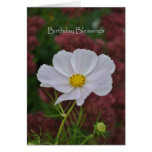 Cosmos Birthday Blessings Greeting Cards