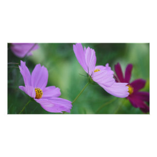 Cosmos flower and meaning personalized photo card