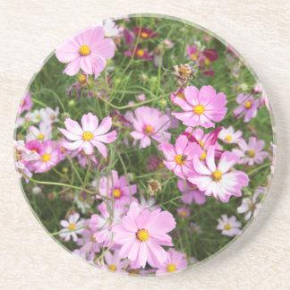 Cosmos Flower (Bidens Formosa). Kirkwood Beverage Coasters