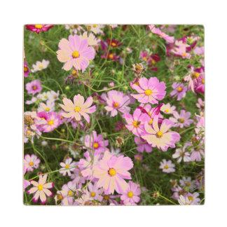 Cosmos Flower (Bidens Formosa). Kirkwood Maple Wood Coaster