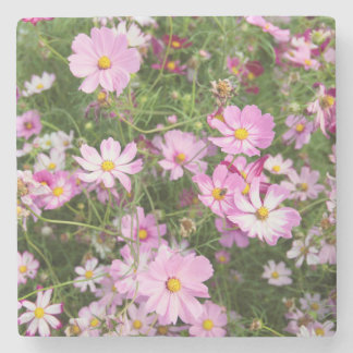 Cosmos Flower (Bidens Formosa). Kirkwood Stone Beverage Coaster