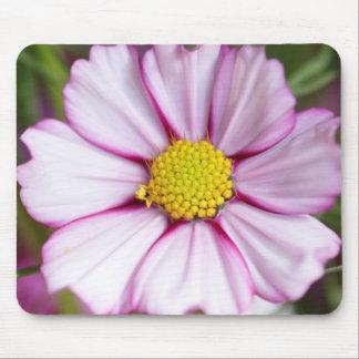 Cosmos Flower (bidens formosa) Mouse Mat