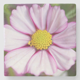 Cosmos Flower (bidens formosa) Stone Coaster