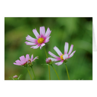 Cosmos Flowers Card