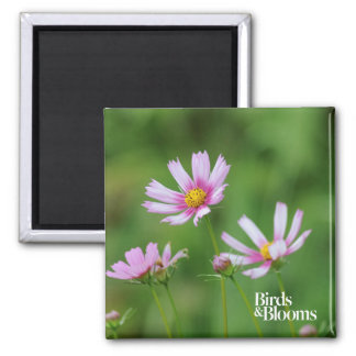 Cosmos Flowers Square Magnet