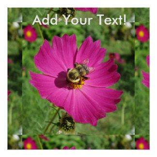 Cosmos Red Flower Bee Poster