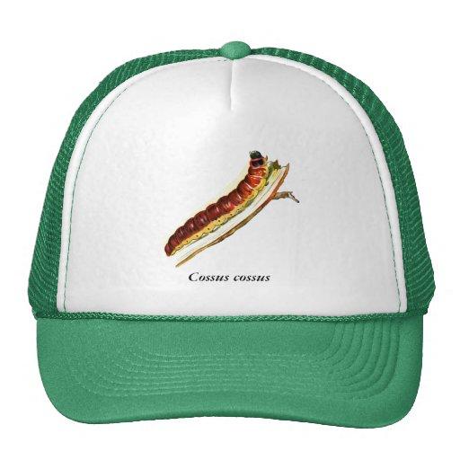 Cossus cossus caterpillar mesh hats