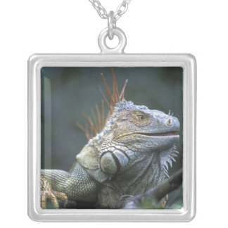 Costa Rica, Alajuela Province, Muelle San Silver Plated Necklace