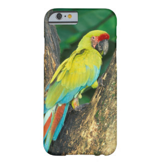 Costa Rica, Ara Ambigua, Great Green Macaw. Barely There iPhone 6 Case