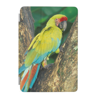 Costa Rica, Ara Ambigua, Great Green Macaw. iPad Mini Cover
