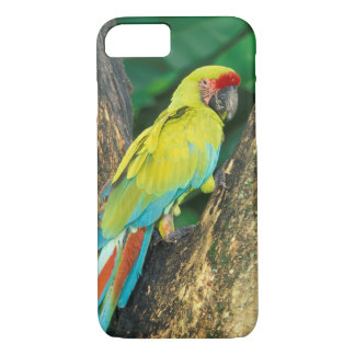 Costa Rica, Ara Ambigua, Great Green Macaw. iPhone 7 Case
