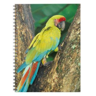 Costa Rica, Ara Ambigua, Great Green Macaw. Notebooks