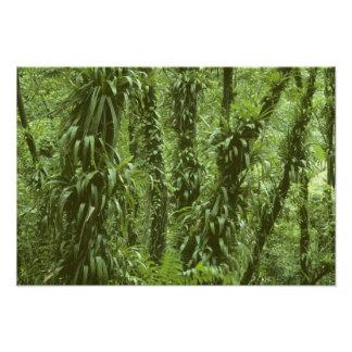 Costa Rica, Arenal National Park, rainforest Photograph