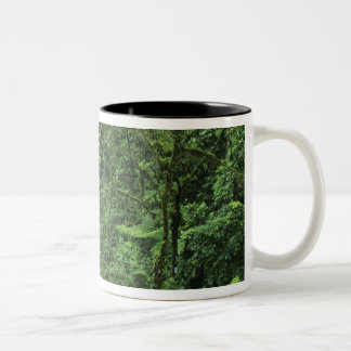 Costa Rica, Arenal Volcano area, Hanging Bridges Two-Tone Coffee Mug
