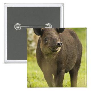 Costa Rica. Bairdis Tapir Tapirus bairdii) 15 Cm Square Badge