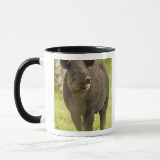 Costa Rica. Bairdis Tapir Tapirus bairdii) Mug