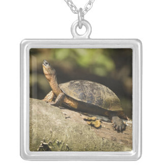 Costa Rica. Black Wood Turtle Rhinoclemmys Silver Plated Necklace