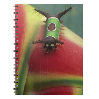 Costa Rica, Close-up of Caterpillar on Heliconia Notebooks