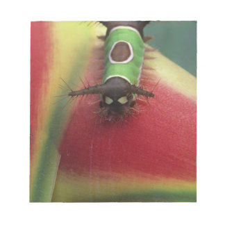 Costa Rica, Close-up of Caterpillar on Heliconia Notepad