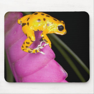Costa Rica. Close-up of poison dart frog on Mouse Mat