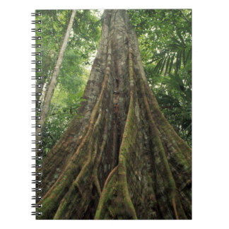 Costa Rica, Corcovado National Park, Buttressed Notebooks