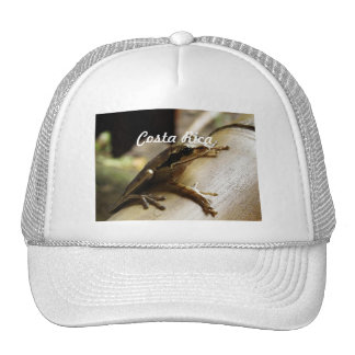 Costa Rica Frog Mesh Hats