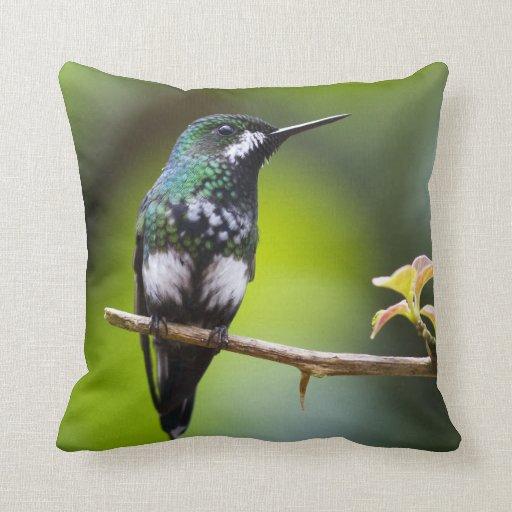 Costa Rica Hummingbird Pillow