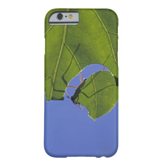 Costa Rica, Leaf cutter ants, Atta cephalotes Barely There iPhone 6 Case