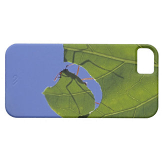 Costa Rica, Leaf cutter ants, Atta cephalotes iPhone 5 Cases